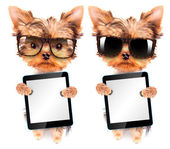 Dog wearing a shades and holding tablet pc — 图库照片