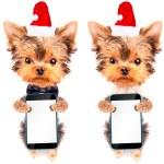Christmas dog as santa with phone — Stock Photo #58100923