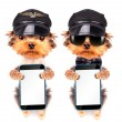 Dog  dressed as pilot with phone — Stock Photo #58101483