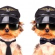Dog  dressed as pilot — Stock Photo #58105237
