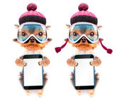 Dog  dressed as skier with phone — 图库照片