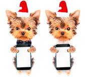 Christmas dog as santa with phone — 图库照片