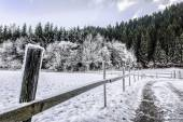 Zmrazené plot — Stock fotografie