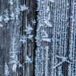Frosty wood — Stock Photo #58471909