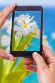 Photographing a tropical flower — Stock Photo