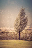 Vintage small tree — Stock Photo
