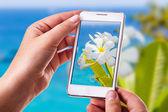 Fotografia di telefono fiore tropicale — Foto Stock