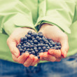 Blueberry fresh picked organic food in woman hands giving Healthy Lifestyle northern forest recreation — Stock Photo #53403135