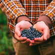 Blueberry fresh picked organic berries food in man hands Healthy Lifestyle northern forest recreation — Stock Photo #53403351