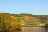 Moselle river,Germany — Stockfoto