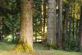 árboles forestales — Foto de Stock