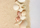 Seashells and sand background — Stock Photo