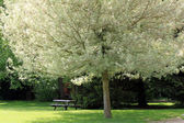 Beautiful tree in the park — Stock Photo