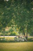 Deux vélo dans le parc — Photo