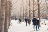 Tourists enjoy tree-lined trails of Nami Island (Namiseom) — Stock Photo