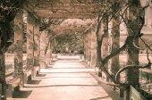 Pergola tunnel of climbing plant — Stockfoto