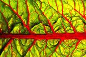 Beet leaf texture — Stock Photo