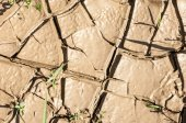 Cracked earth texture — Stock Photo