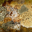 Texture of lichen on the stone — Stock Photo #59870195
