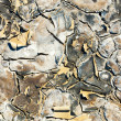 Texture of dry land — Stock Photo #59880127