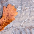 Puddle of ice. Oak leaf in autumn — Stock Photo #59900855