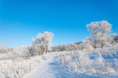 Winter, winter-tide, winter-time — Stockfoto