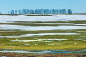 Spring snow last winter — Stockfoto