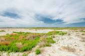 Steppe saline soils. saline  salt  in salt.  steppe  prairie  ve — Stock Photo