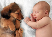 Sleeping baby and puppy — Stock Photo
