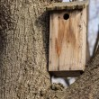 Wooden birdhouse hanging on a tree — Stock Photo #62915387