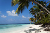 Tropical island palm sea and sky — Stock Photo