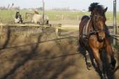 Horse Training — Stock Photo