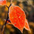 Colorful autumn leaves and plants covered with frost — Stock Photo #61908479