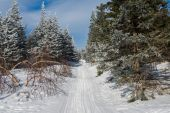 Snow-covered forest on the slopes of the mountain. — Stock Photo