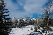 Snow-covered forest on the slopes of the mountain.  — ストック写真