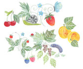 Summer berries and fruits, watercolor — Stock Photo