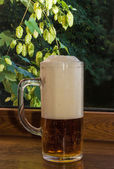 Glass of beer on a background of branches of hops — Stock Photo