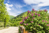 Carpathians. Road in mountains — Stock Photo