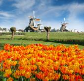 Zaanse Schans — Stock Photo