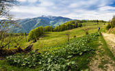 Carpathian spring landscape — Stock Photo