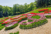 Multicolored tulips in the park — Stock Photo