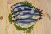 Atlantic herring with ice cubes — Stockfoto