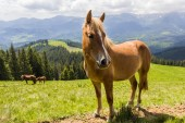 Horse on a mountain pasture — Stock Photo