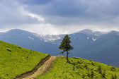 Carpathian landscape with a lone tree — Stock Photo