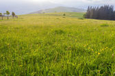 Mountain pasture in the early morning — Stock Photo