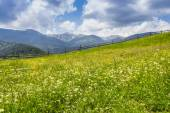 Carpathian landscape with with meadow  — Stock Photo