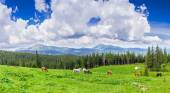 Meadow with horses in the Carpathian Mountains — Stock Photo