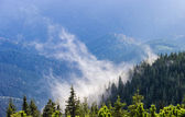 Low located cloud among the trees in a spruce forest on the moun — Stock Photo