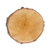 Tree cut — Stock Photo