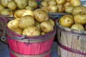 Yukon Gold potatoes — Stock Photo
